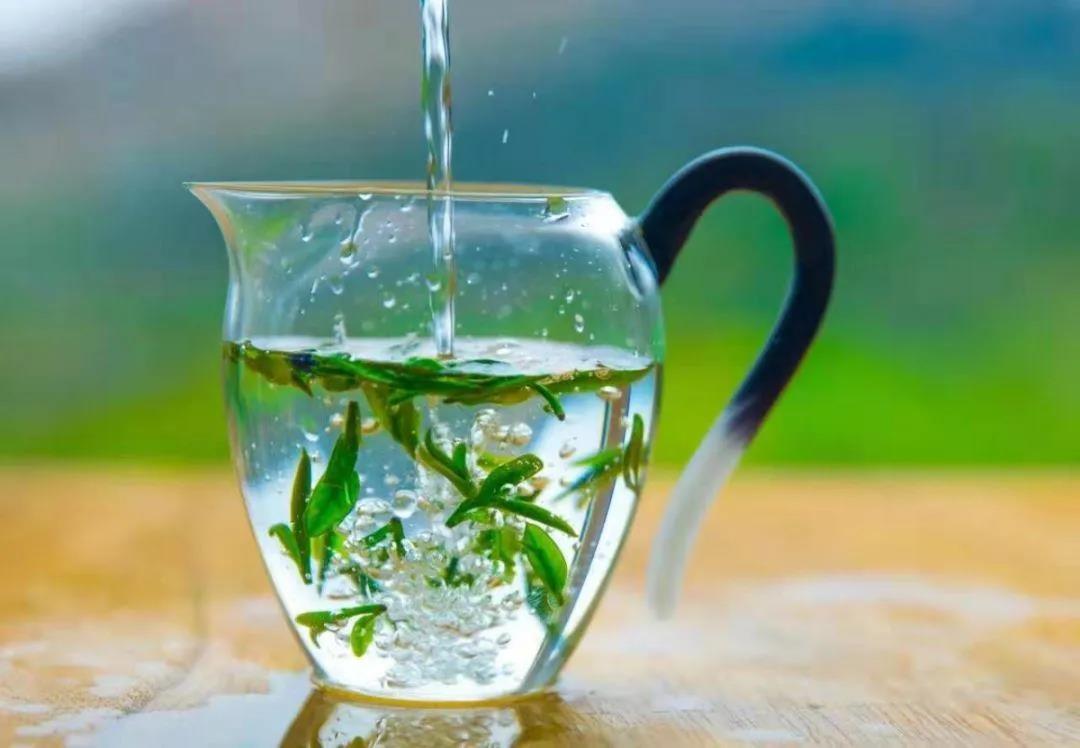 日照绿茶春茶价格